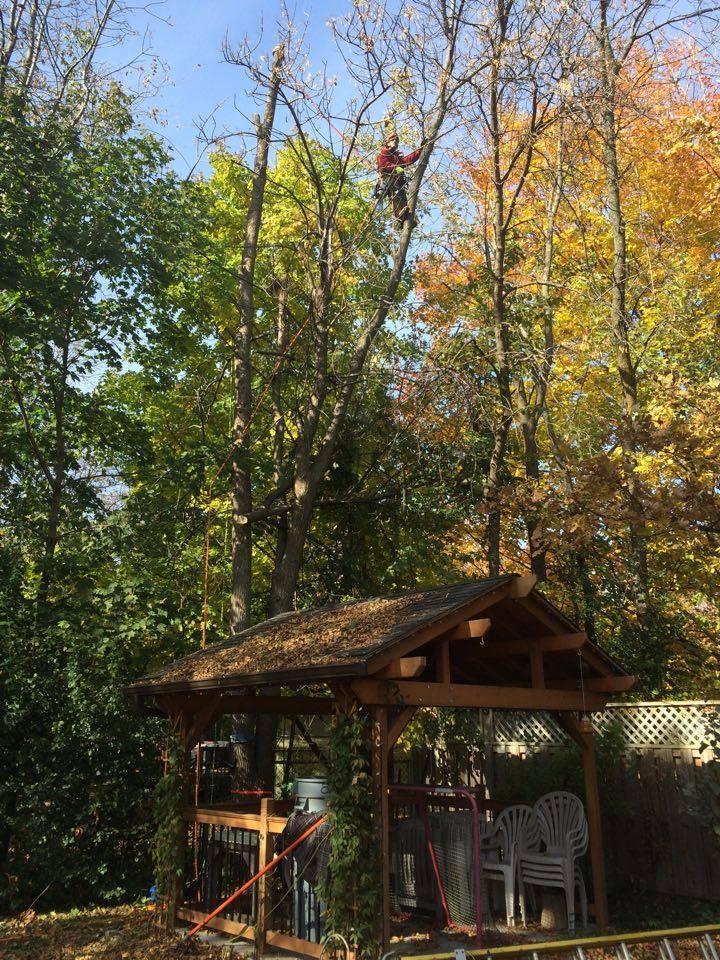 emondage lagage d 39 arbres matures le perrot vaudreuil dorion montr al s pass vert. Black Bedroom Furniture Sets. Home Design Ideas